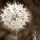 Thistle head in Sepia plus friend by pennyswork