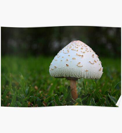 The Mushroom Poster