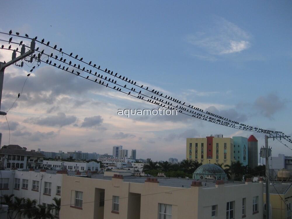 Bird Stadium by aquamotion