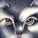 Warrior Cats Violetpaw Violetshine by moonphiredesign