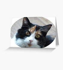Puce chatte calicot Carte de vœux