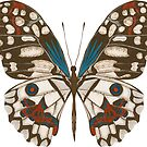 Butterfly by Lucinda Kidney