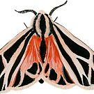 Moth by Lucinda Kidney