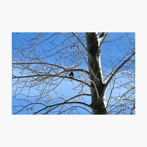 birdie in the Aspen Photographic Print