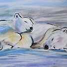 Sleeping Polar Bears by Mike Paget