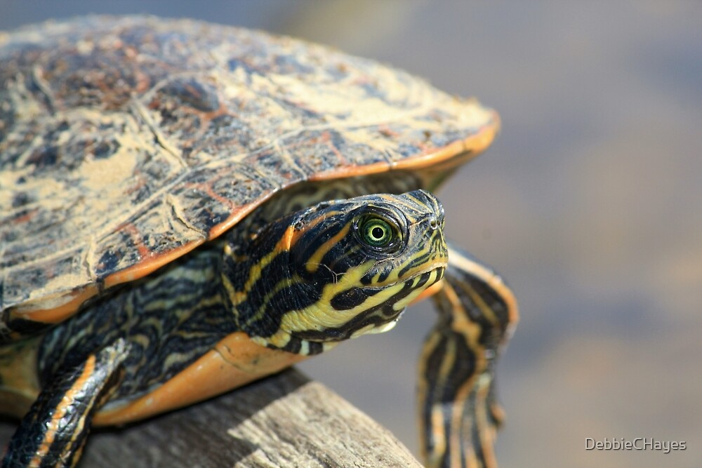 Turtle on a Log by DebbieCHayes