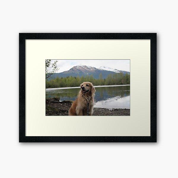 Alaskan Puppy Framed Art Print