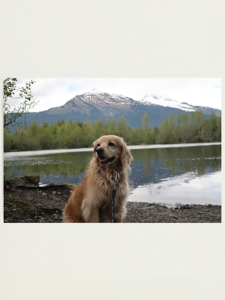 Alternate view of Alaskan Puppy Photographic Print