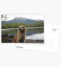 Alaskan Puppy Postcards