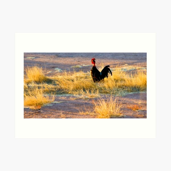 rooster of Mexico Art Print