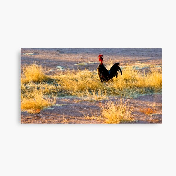 rooster of Mexico Canvas Print