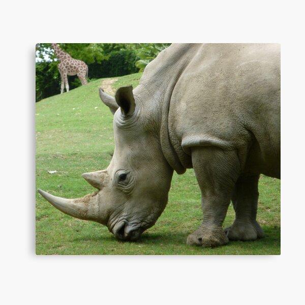 Rhinocéros Impression sur toile