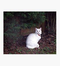 Casper in the garden Photographic Print