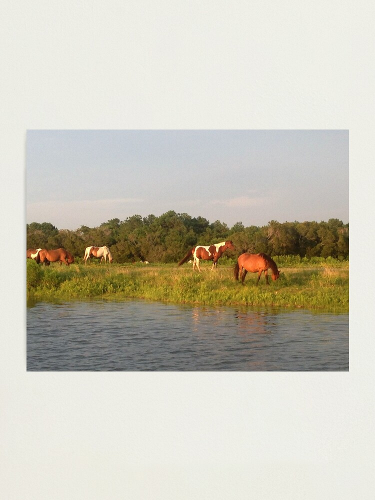 Alternate view of Chincoteague Ponies Photographic Print