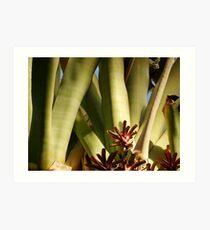 Giant Bromeliad Art Print