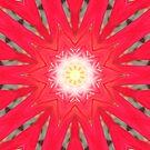 Kaleidoscope flower by medley