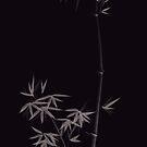 Elegant stylish Zen design of Bamboo stalks and leaves grey illustration on black background art print by AwenArtPrints