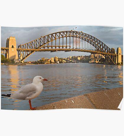 Bird and bridge Poster