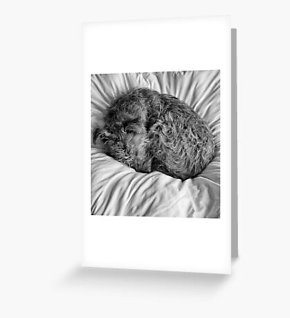 Tired Terrier Greeting Card
