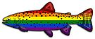 Rainbow Trout by Sun Dog Montana