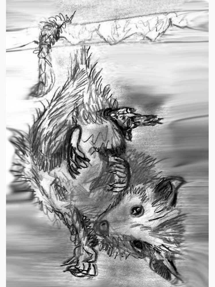 Sketchbook Opossum by AstridS