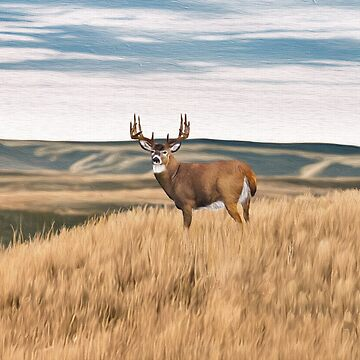 High Prairie Deer by Skyviper