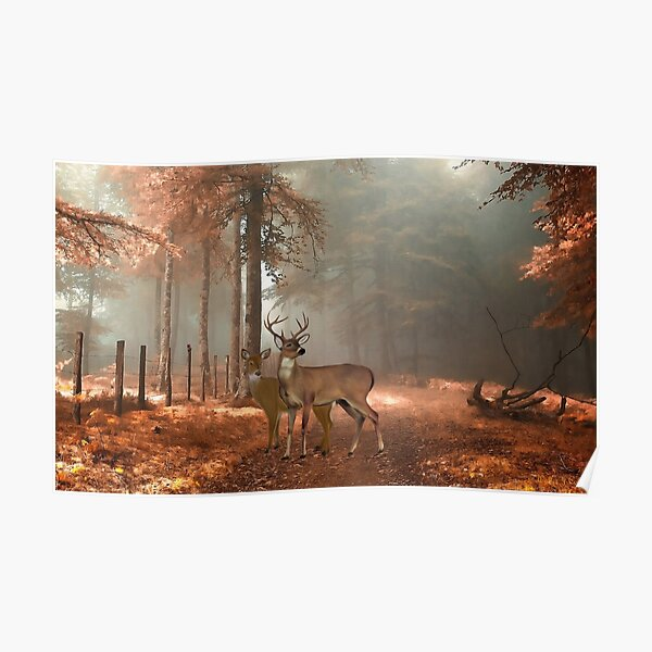 Male and Female Whitetail Deer Poster