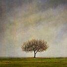 Lone Cherry Tree by Helen K. Passey