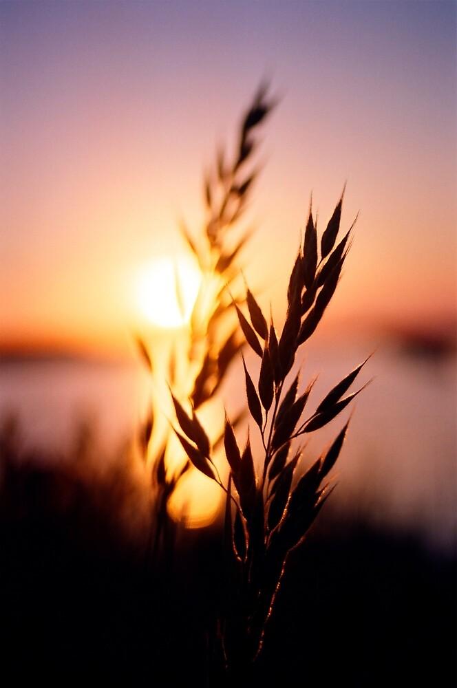 Wheat Stalk Silhouette by Mark Eden