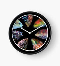 Reloj Macrofaringodon