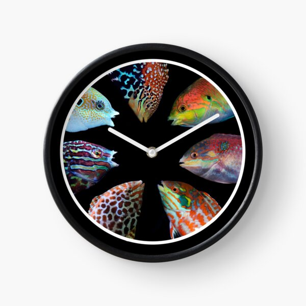 Macropharyngodon  Clock