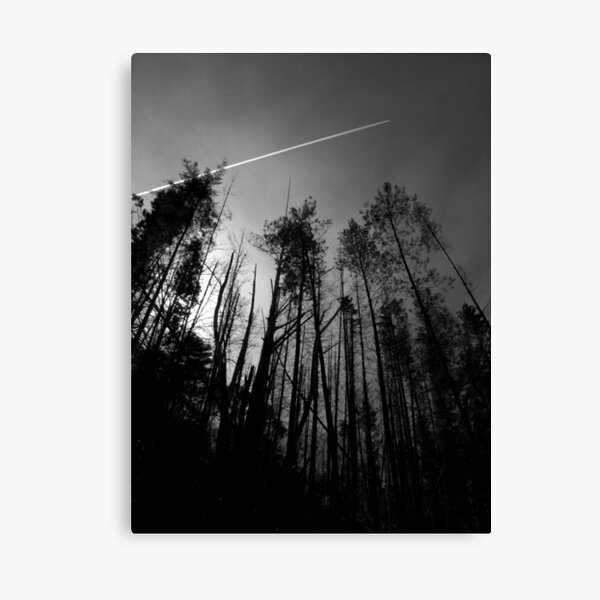 Scary Trees- Mt Lofty Eastern Slope Canvas Print