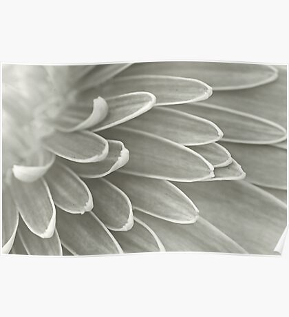 Gerbera Poems - The Quest of Realization Poster