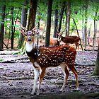 Axis Deer by Cynthia48
