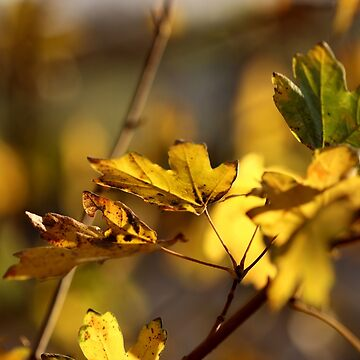 Autumn Leaves III by cuprum