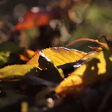Autumn Leaves IV by cuprum