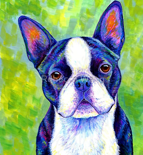 Colorful Boston Terrier Dog by Rebecca Wang