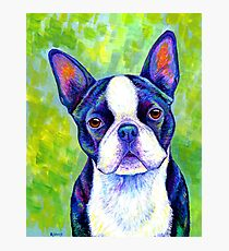 Colorful Boston Terrier Dog Photographic Print