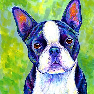 Colorful Boston Terrier Dog by lioncrusher