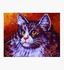 Longhair Cat Photographic Print