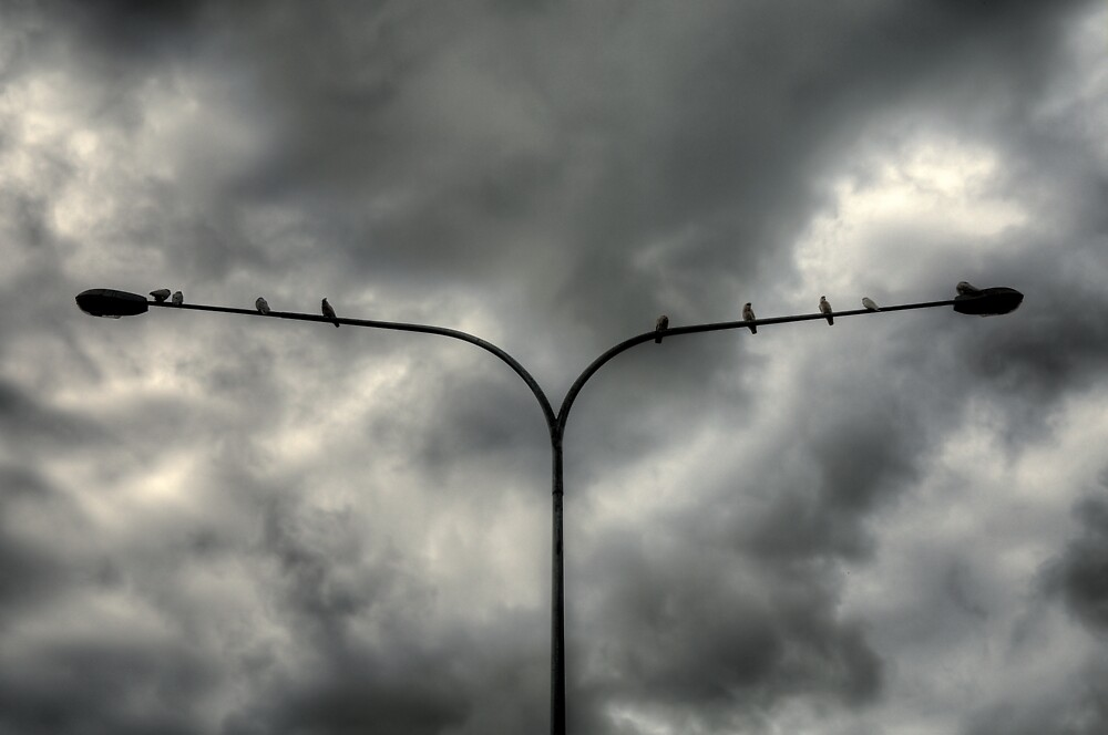 Birds on a ......Light Pole! by Jason Ruth
