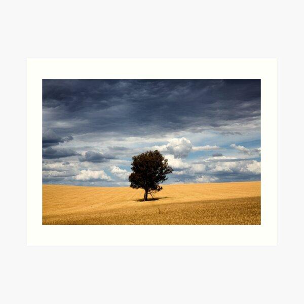 Wheatbelt Art Print