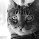 Tasha in black & white by jodi payne