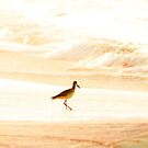Morning Swim by Phillip M. Burrow