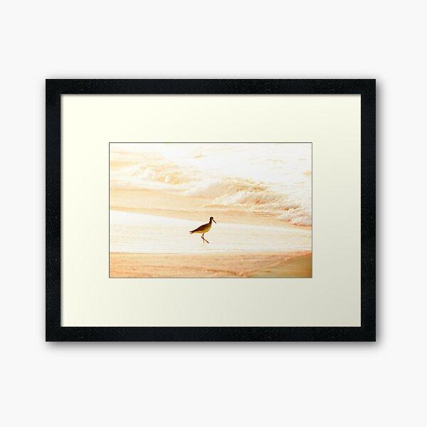 Morning Swim Framed Art Print