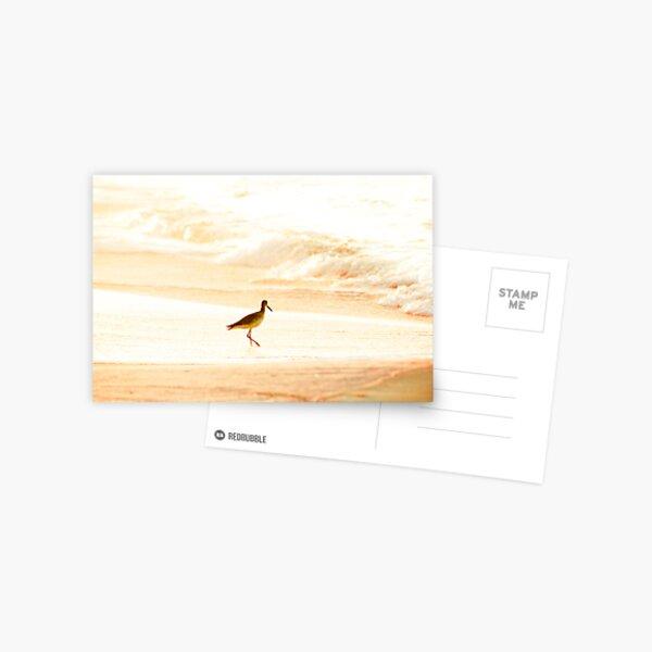 Morning Swim Postcard