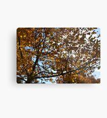 Fall sky leaves Metal Print