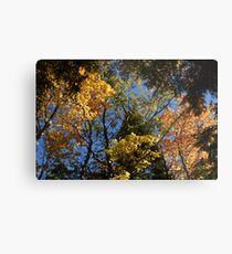 colorful leaves fall vermont Metal Print