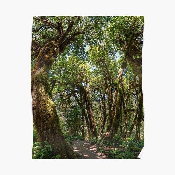 Hoh Rainforest Poster