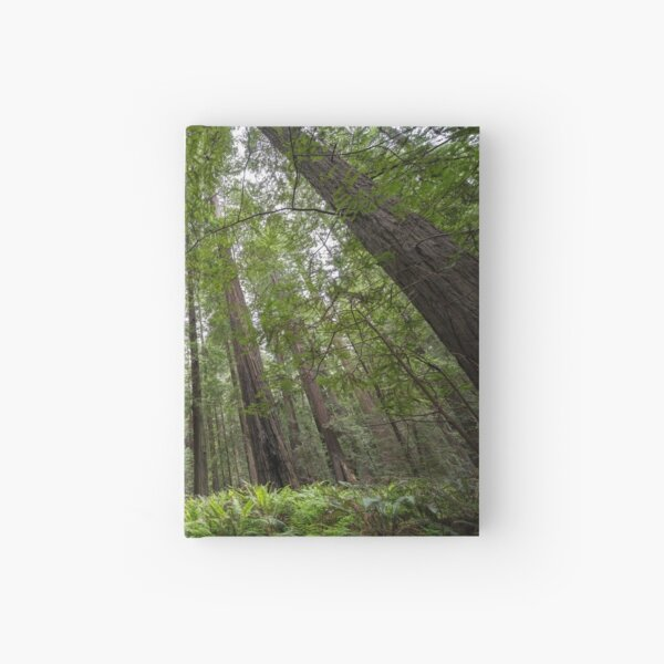 Redwoods Hardcover Journal